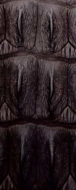 Nero coda coccodrillo